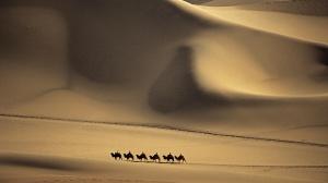 seis_camellos_en_un_desierto-1920x1080 (1)